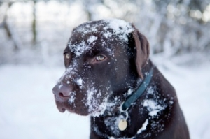Winter Weather Dangers for Pets and How to Keep Them Safe
