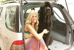 6 Tips for Safe Car Travel with Your Dog