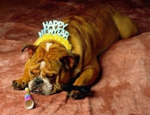 10 Safety Tips For Your Dog On New Year's Eve