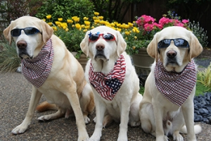 Pets more likely to run away on the 4th of July