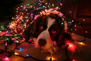 Tips To Keep Your Dog Safe During the Holidays