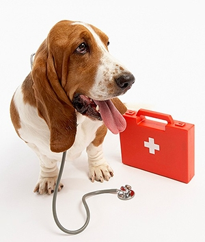 Preparing a Personal First Aid Kit for Pets