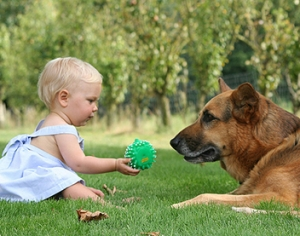 Introducing Your Baby to Your Dog: Ready Your Pet for a Newborn