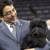 "Affenpinscher ""Banana Joe"" Wins Westminster Dog Show"